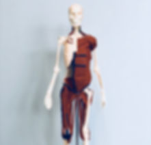 Anatomy in 3D Balanced Body Instructo Training Pilates Module at Pure Pilates Gulf breeze Downtown pensacola