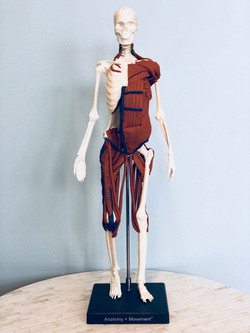 Anatomy in 3D at Pure Pilates