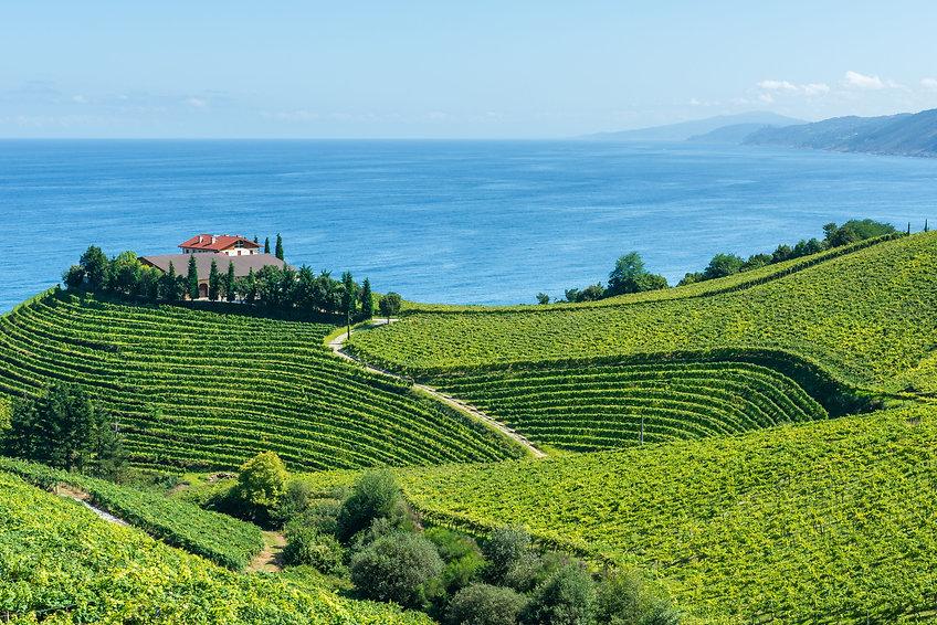 NY Italian Wein Spanien.jpeg