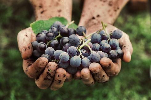 NY Italian Wein Natural.jpeg
