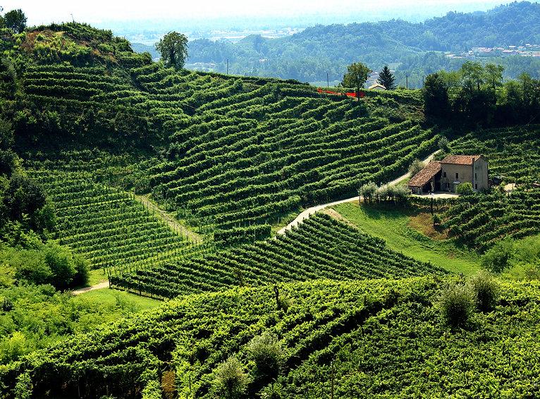 NY Italian Wein Italian.jpeg