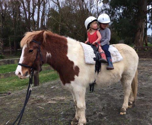 SWWI_Farming_Equestrian_NZ_Icelandic_Hor