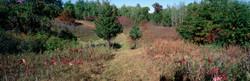 Jackson Meadow