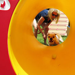 Rocky making his way through a Green Paws dog tunnel!