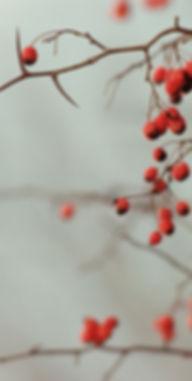 Berry Filialer