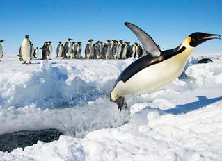 An Emperor Penguin Colony in Antarctica Vanishes