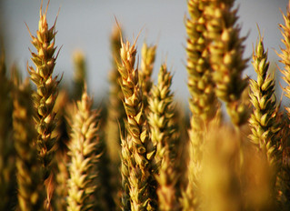 Ask Well: Getting the Most Out of Whole Grains