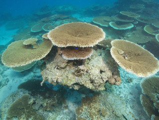Giant coral reef shows new signs of life