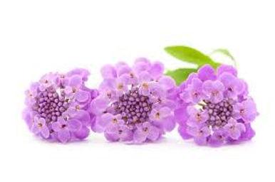 purpleflower.jpeg