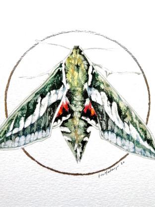 Lepidopter #4