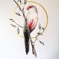 Ornithology addict 62