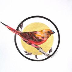 Ornithology addict nº124