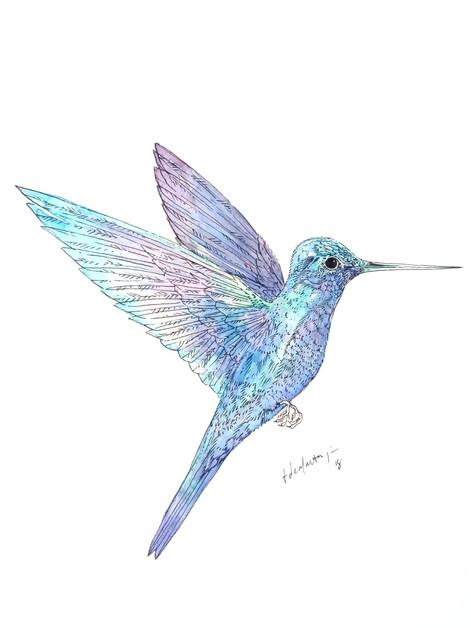 Ornithology addict 19