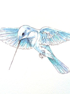 Ornithology addict 3