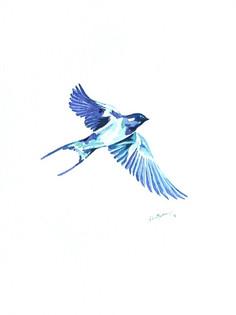 Ornithology addict 6