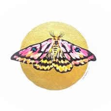 Lepidoptology addict nº9