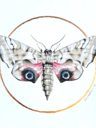 Lepidoptera #1