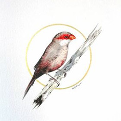 Ornithology addict #104