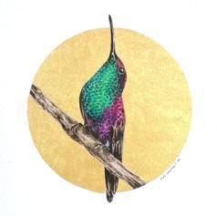 Ornithology addict nº123