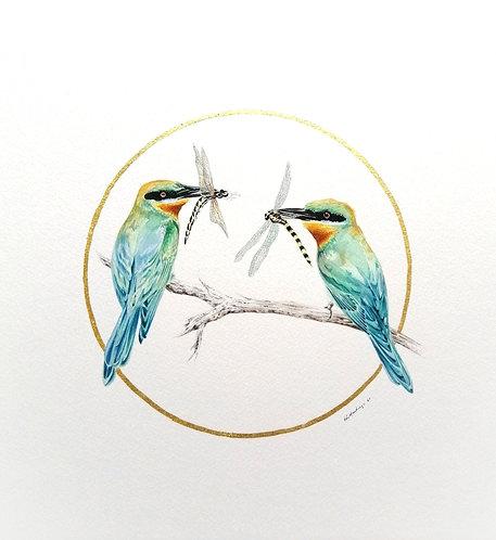 Ornithology addict nº147