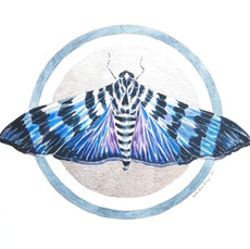Lepidopterology addict nº11
