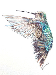 Ornithology addict 22