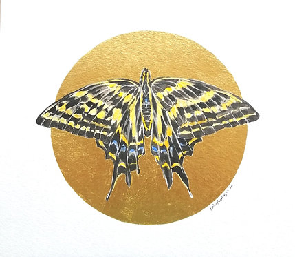 Lepidopterology addict nº1