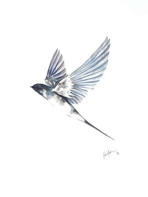 Ornithology addict 21