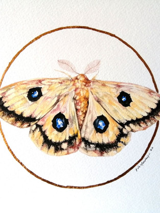 Lepidoptera #3