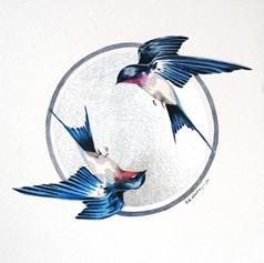 Ornithology addict nº119