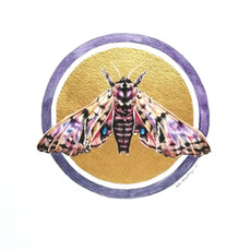 Lepidoptology addict nº10