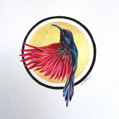 Ornithology addict nº122