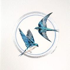 Ornithology addict nº118