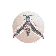 Lepidoptology addict nº8