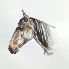 Equus Caballus III