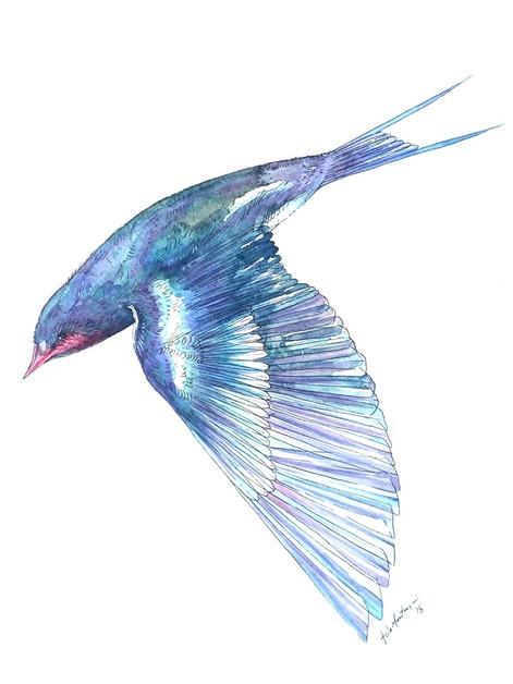 Ornithology addict 8