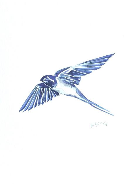 Ornithology addict 23