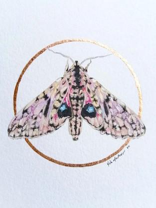 Lepidoptera #2