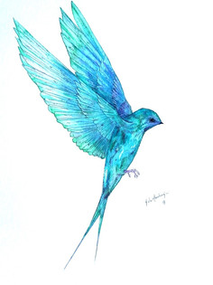 Ornithology addict 13