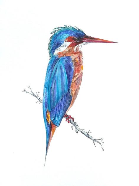 Ornithology addict 11