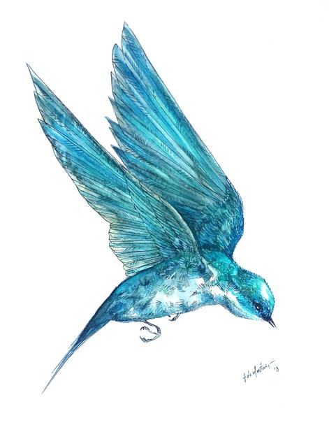 Ornithology addict 17