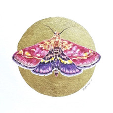 Lepidopterology addict nº12