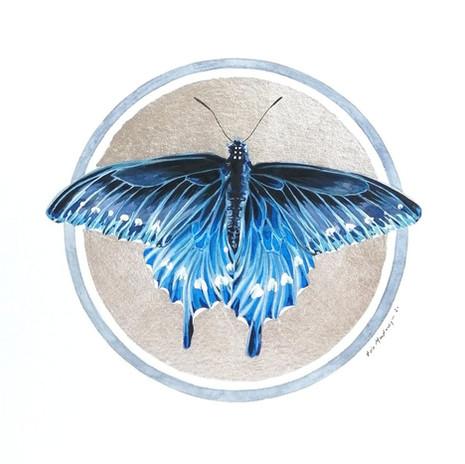 Lepidoptology addict nº3