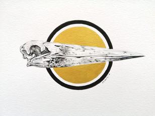 Skull study II