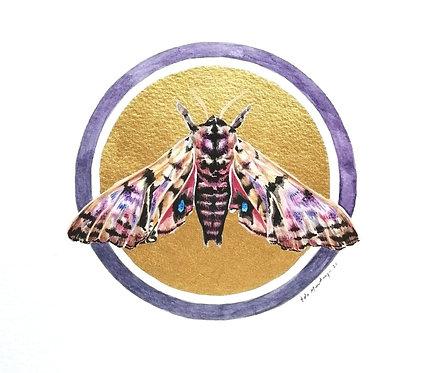 Lepidopterology addict nº10