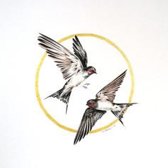 Ornithology addict nº121