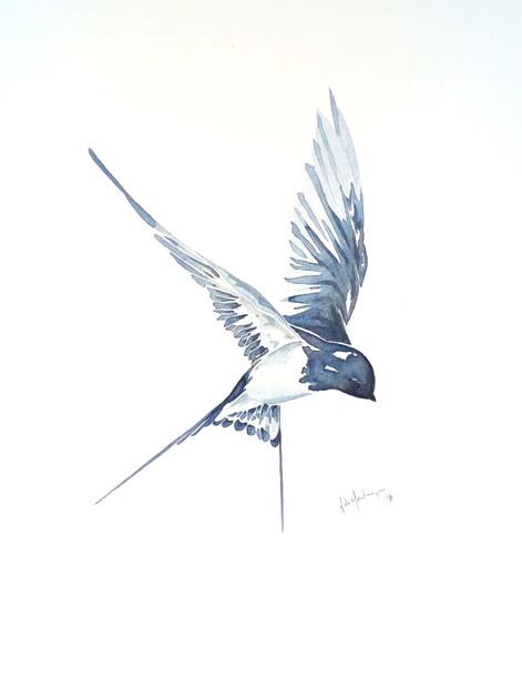 Ornithology addict 7
