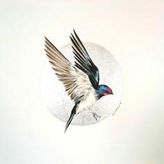Ornithology addict nº126