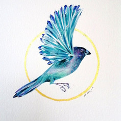 Ornithology addict #107
