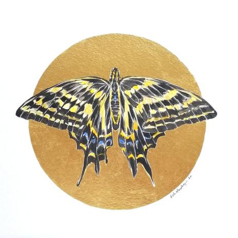 Lepidoptology addict nº1